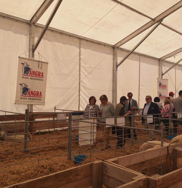 Carpas para ferias agrícolas:  Expoforga, Feria agrícola, ganadera y comercial
